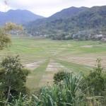 Spiderweb Ricefield  near Ruteng