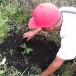 Replant program